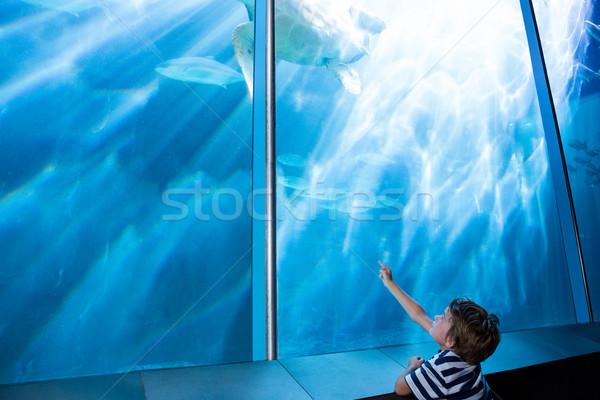 Moço indicação mar tartaruga dedo aquário Foto stock © wavebreak_media