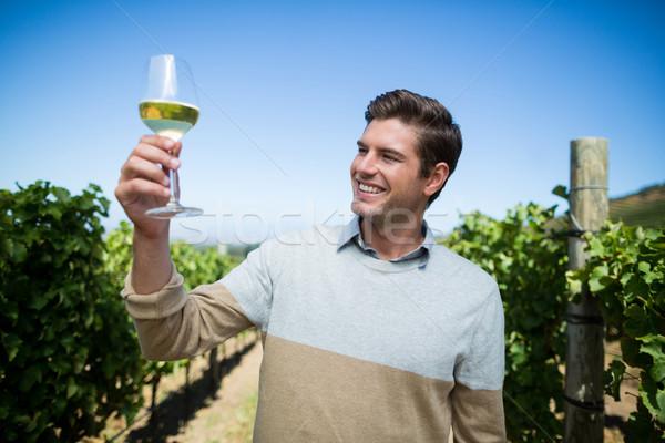 Feliz moço copo de vinho vinha blue sky Foto stock © wavebreak_media