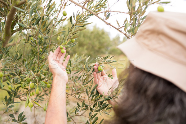 Man observing olives on plant Stock photo © wavebreak_media