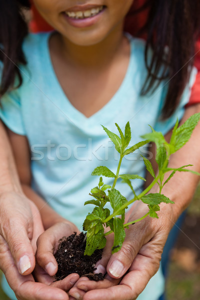 Midsection of smiling girl with grandmother holding seedling Stock photo © wavebreak_media