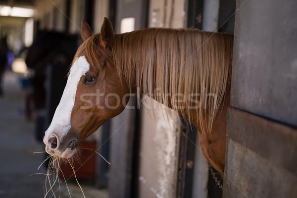 Brown horse at stable Stock photo © wavebreak_media