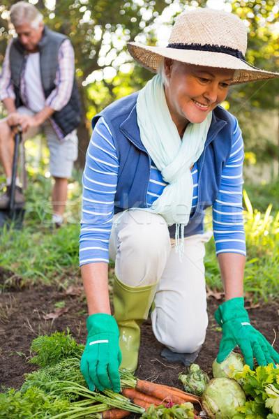 幸せ 植木屋 同僚 作業 庭園 成熟した ストックフォト © wavebreak_media