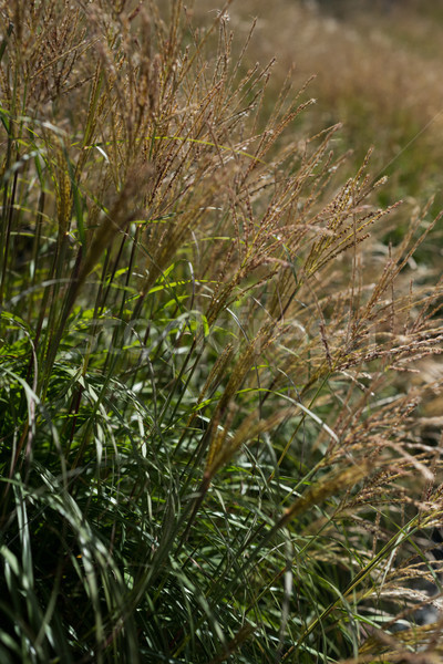 Kilátás termény mező napos idő boldog természet Stock fotó © wavebreak_media