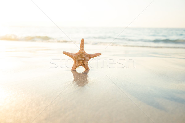 Starfish sable belle voir poissons vagues Photo stock © wavebreak_media