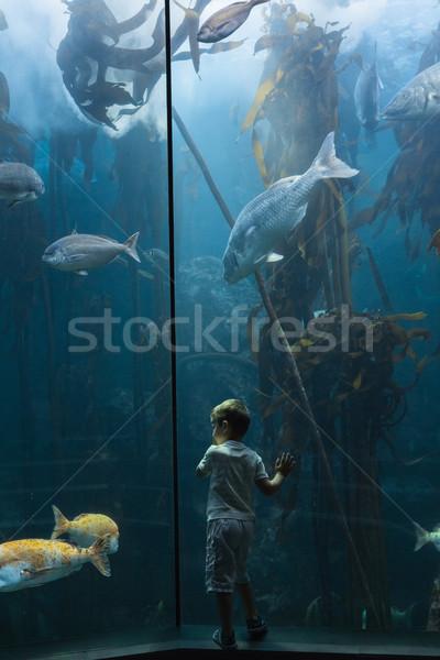 Kicsi fiú néz hal tank akvárium Stock fotó © wavebreak_media