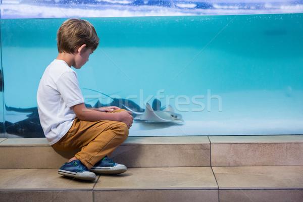 Moço olhando tanque aquário criança mar Foto stock © wavebreak_media