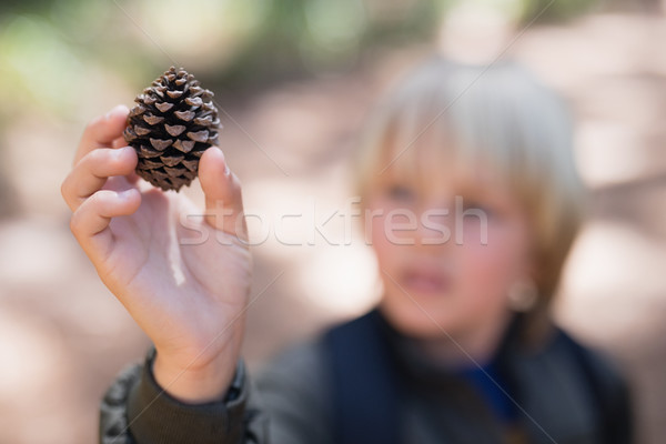 Jongen pine kegel bos Stockfoto © wavebreak_media