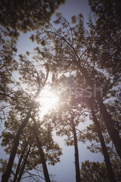 Low angle view of trees against sky Stock photo © wavebreak_media