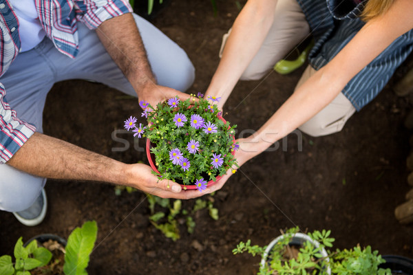High angle view of gardeners holding potted plants at garden Stock photo © wavebreak_media