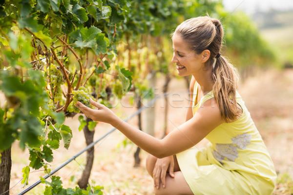 Female vintner inspecting grapes Stock photo © wavebreak_media