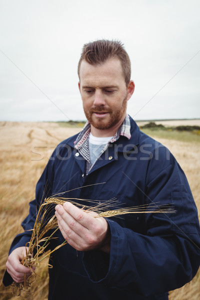 Stock photo: Farmer checking his crops in the field