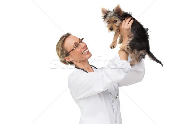 állatorvos magasra tart Yorkshire terrier kutyakölyök mosolyog Stock fotó © wavebreak_media