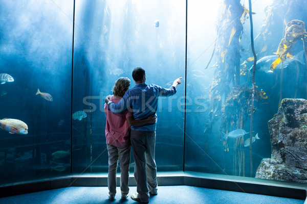 Wear view of couple looking at fish in the tank Stock photo © wavebreak_media