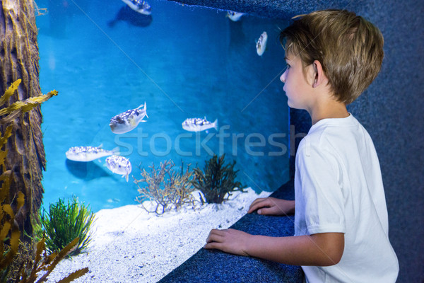Moço olhando peixe tanque aquário natureza Foto stock © wavebreak_media