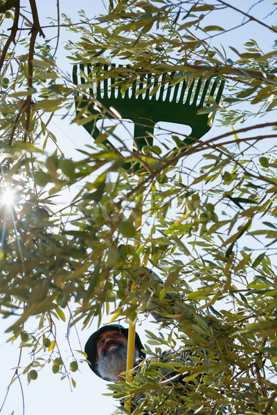 фермер оливками инструменты фермы Сток-фото © wavebreak_media