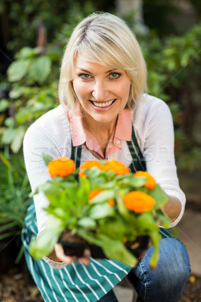 Female gardener showing potted flowering plant Stock photo © wavebreak_media