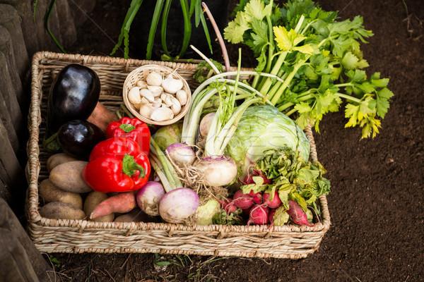 Widoku warzyw wiklina skrzynia ogród Zdjęcia stock © wavebreak_media