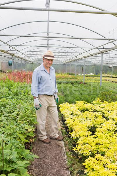 Férfi visel kalap kesztyű üvegház mosolyog Stock fotó © wavebreak_media