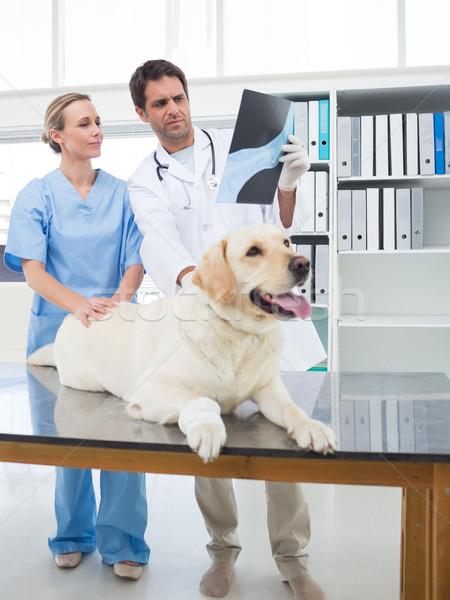 Discutir raio x cão masculino veterinário colega Foto stock © wavebreak_media