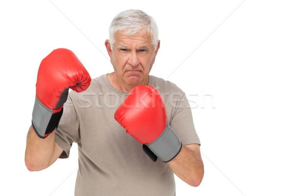 Portret starszy bokser stałego biały Zdjęcia stock © wavebreak_media