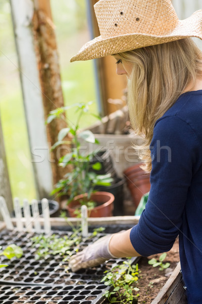 Joli jardinage effet de serre maison jardin Photo stock © wavebreak_media