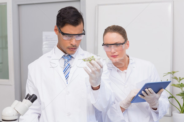 Scientists holding a petri dish with tests of plants Stock photo © wavebreak_media