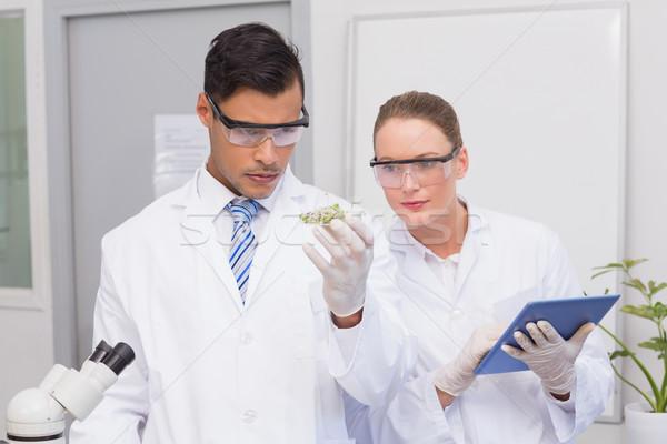 Wetenschappers schotel planten laboratorium vrouw Stockfoto © wavebreak_media