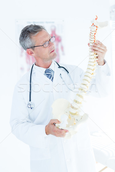 Doctor examining anatomical spine Stock photo © wavebreak_media