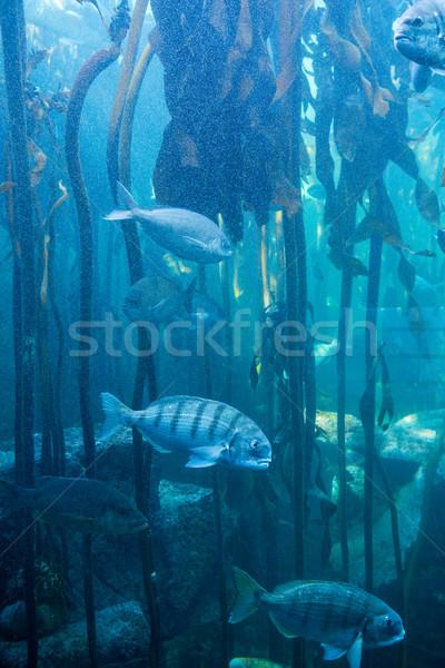 Fish swimming in a tank with algae Stock photo © wavebreak_media