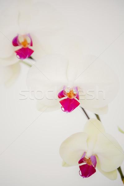 幹 ピンクの花 白 花 工場 ストックフォト © wavebreak_media