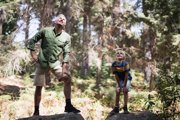 Ciekawy syn ojca stałego skał lasu Zdjęcia stock © wavebreak_media