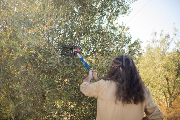 Boeren olijfolie tool oogst boerderij Stockfoto © wavebreak_media