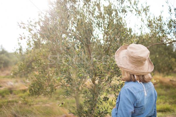 Thoughtful woman standing in olive farm Stock photo © wavebreak_media
