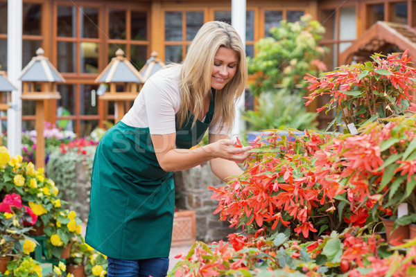 Gardener caring about flowers outdoors in garden center Stock photo © wavebreak_media