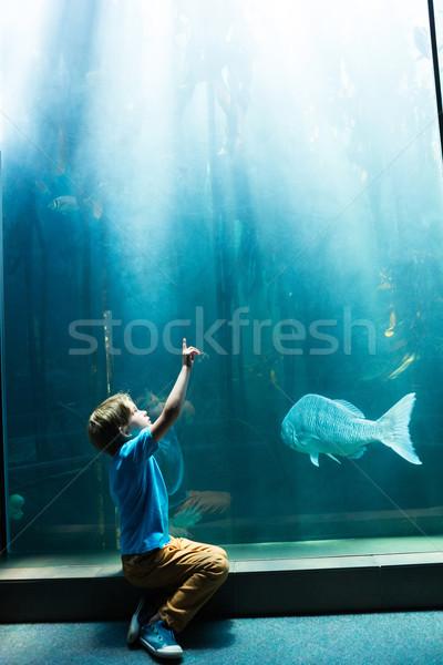Fiatalember mutat felső tank akvárium hal Stock fotó © wavebreak_media