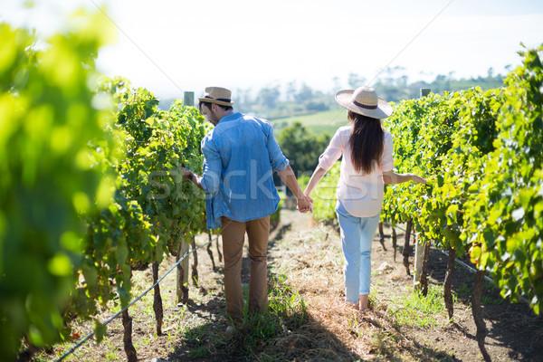 Rear view of couple walking at vineyard Stock photo © wavebreak_media