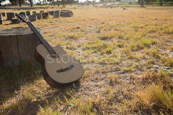 Stock photo: Guitar in the park on a tree stump