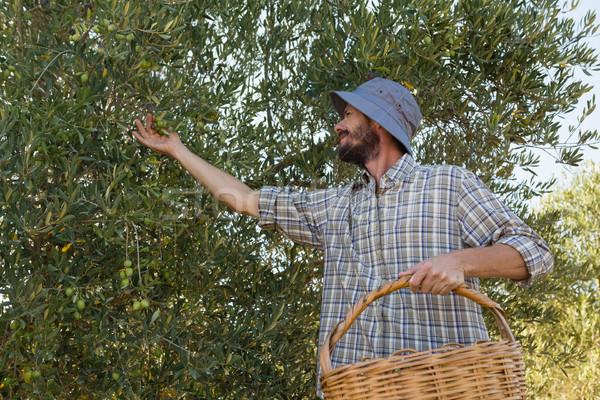 Landbouwer oogst olijven boom internet Stockfoto © wavebreak_media