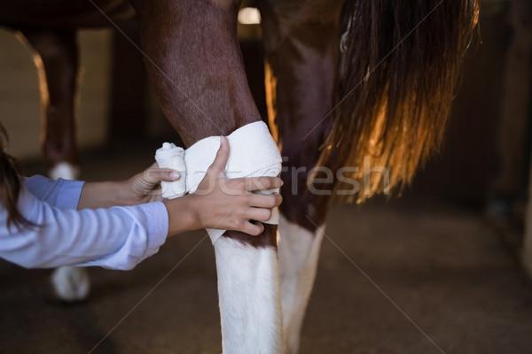 рук женщины ветеринар лошади ногу стабильный Сток-фото © wavebreak_media