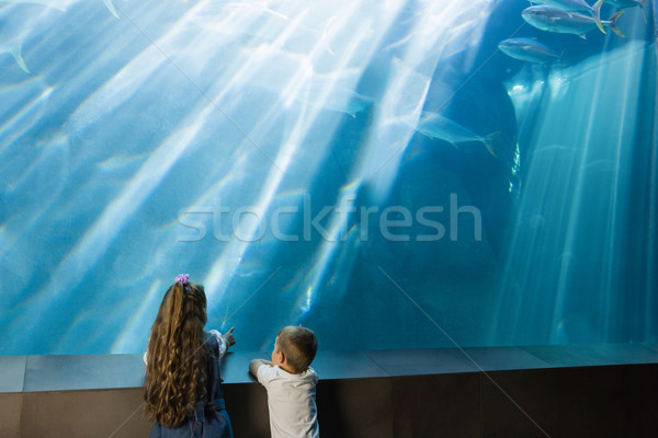 Stock photo: Little siblings looking at fish tank