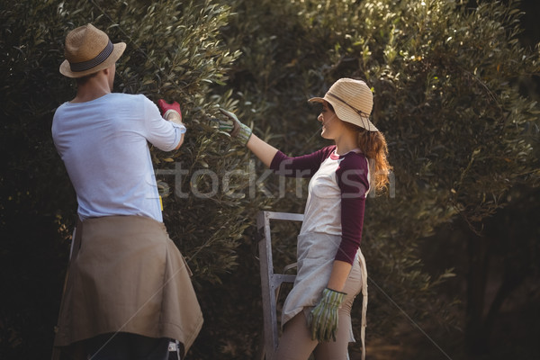 Young couple plucking olives at farm Stock photo © wavebreak_media