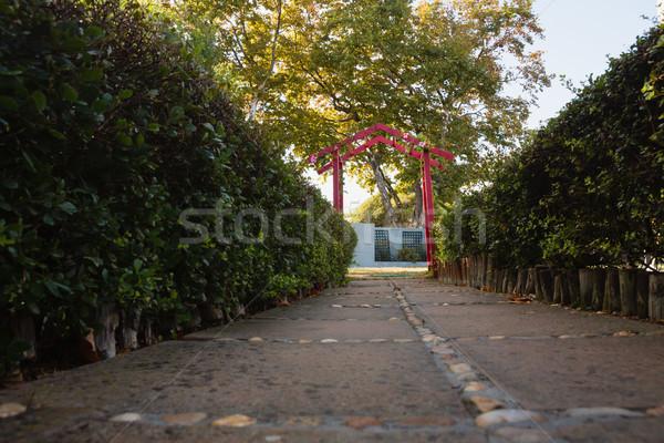 Empty walkway amidst plants Stock photo © wavebreak_media