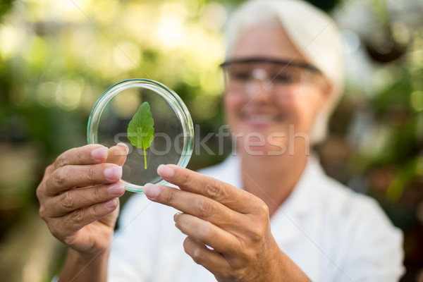 Female scientist examining leaf on petri dish Stock photo © wavebreak_media