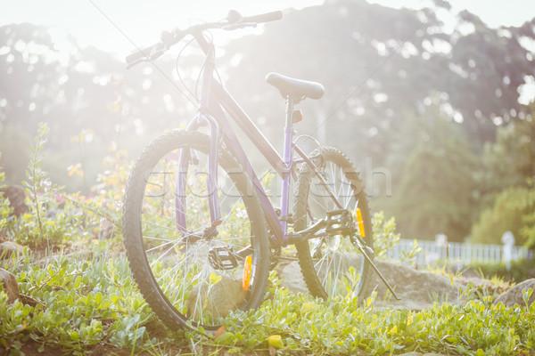 Bicycle parked on grass Stock photo © wavebreak_media