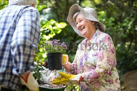 Senior man permanente pot plant tuin Stockfoto © wavebreak_media