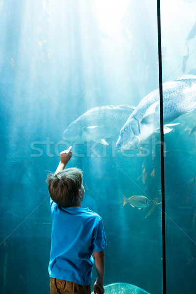 Young man pointing fish in a illuminate tank  Stock photo © wavebreak_media