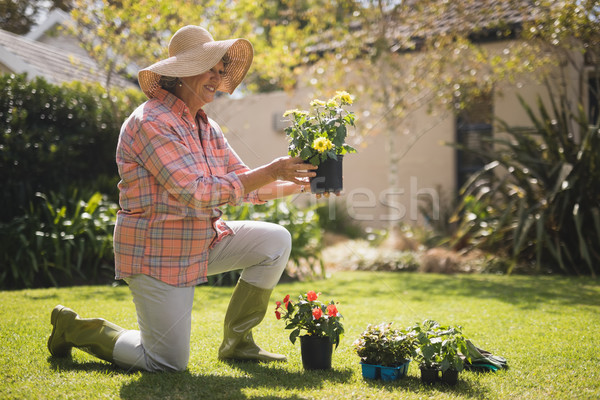 Smiling senior woman holding plant while kneeling in yard Stock photo © wavebreak_media