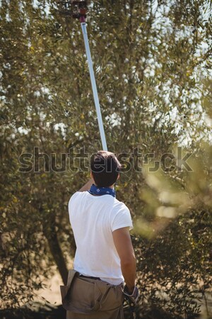 Young man using olive rake at farm Stock photo © wavebreak_media