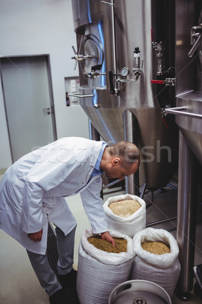 Manufacturer examining barley at brewery Stock photo © wavebreak_media