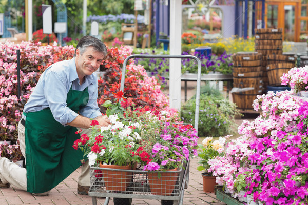 Employee putting flowers in trolley in garden center Stock photo © wavebreak_media